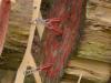 axtwerfen-messerwerfen-bogenfreund-071